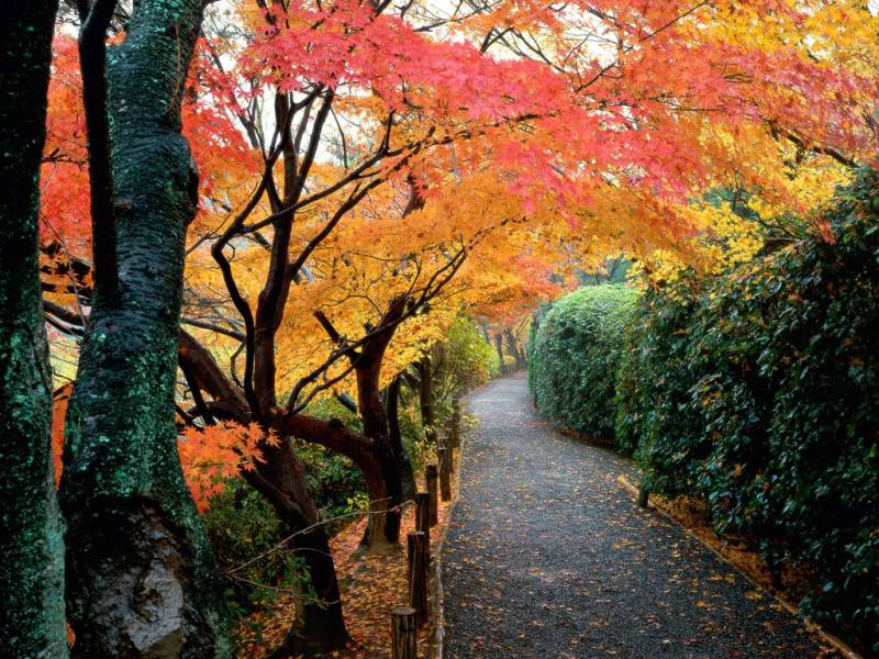 170107_Kyoto_Japan